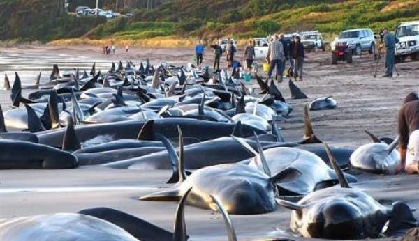 WhalesBeached_JohnNievaart