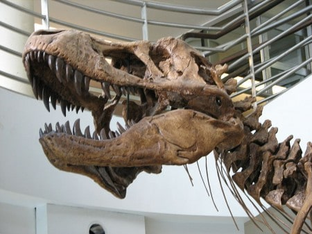 Massive Dinosaur Soft Tissue Discovery In China – Includes Skin And Feathers!