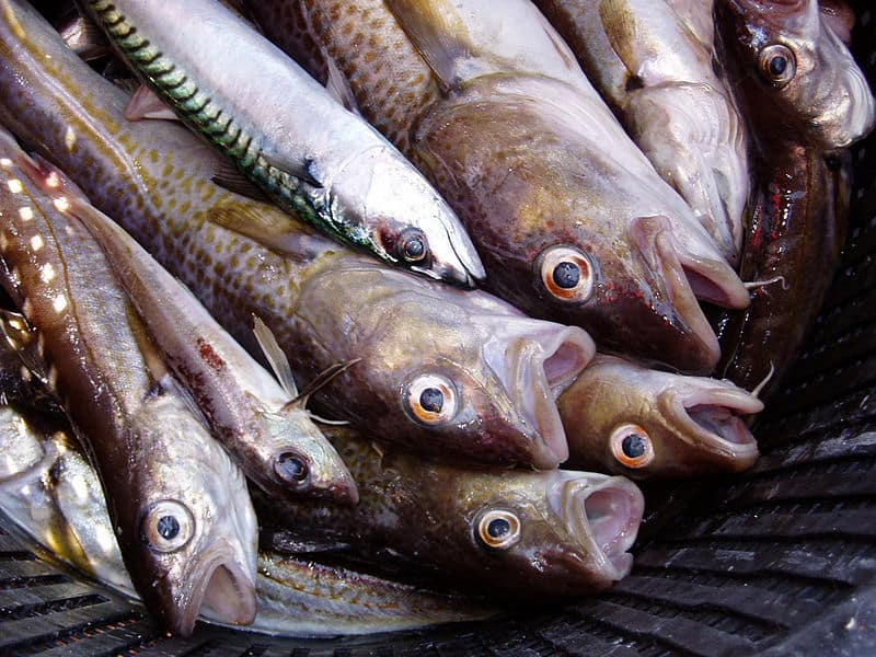 Mass Fish Deaths: Millions Have Been Found Dead All Over The World In The Past Month