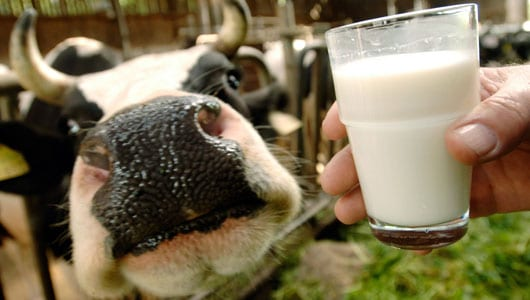 Michigan Dept of Agri Forces Farmer to Dump 248 Gallons of Raw Milk