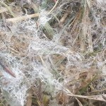 Snow Fibers – Chem Webs – and worldviews
