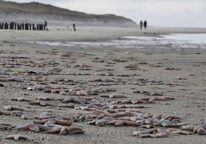 100s of Millions of Animals Have Died Recently Along West Coast — Worst Mortality Event Ever Known —