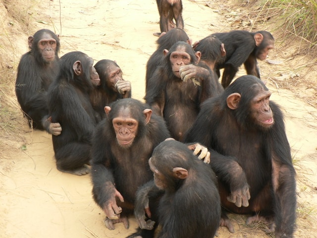 New York City Judge Says Chimps are People. Unborn Babies? Not So Much