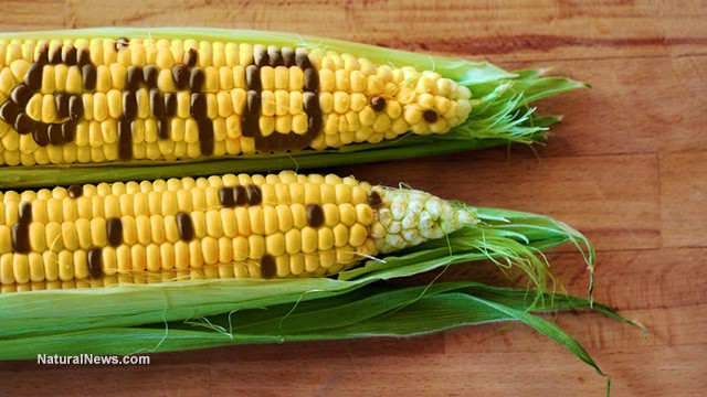 Not Allowed In Other Countries: US-grown GMO Corn and Soy Imports – Considered Unsafe to Eat