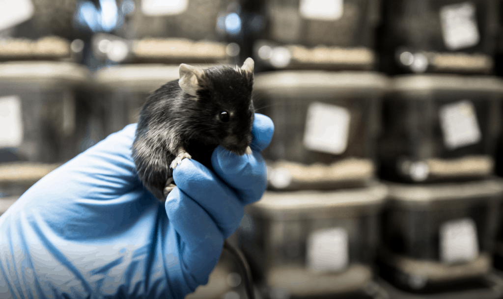 "Mind Control Microscope Changes Behavior Of Mice: Scientists Say They Will Soon ""Treat The Brain As The Keyboard Of A Piano"""