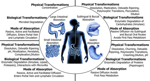 Nano-ALterations-as-it-goes-through-the-digestive-system