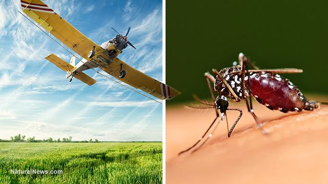 Staged Zika Pandemic was Engineered